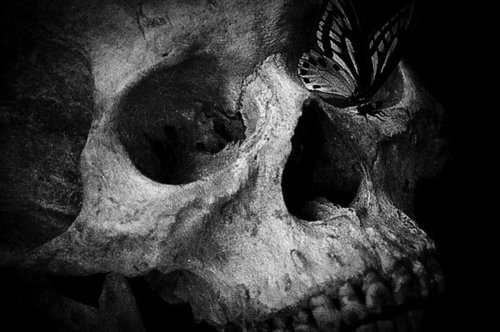 black and white, butterfly, death, skull