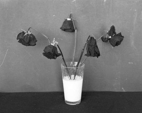 black and white, dead flowers, dead roses, milk, photography, roses, vase