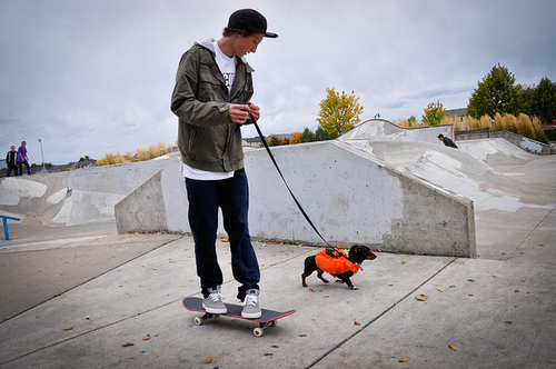 boy, caps, cute, dog, photography, puppy, skate, skateboard, skating