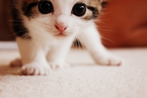 cat, cayoote, cute, cutee, separate with comma