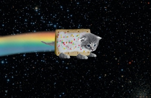 cat, cute, kitten, meow meow meow, non stop nyan cat