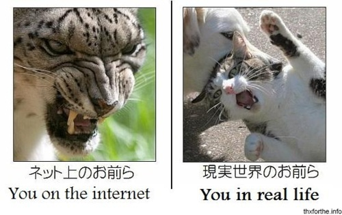 cat, dog, funny, haha, internet
