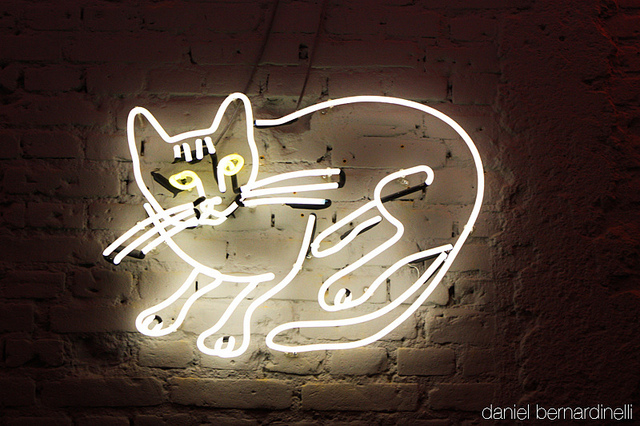 cat, light, meow, neon