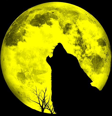 full moon, moon, night, wolf