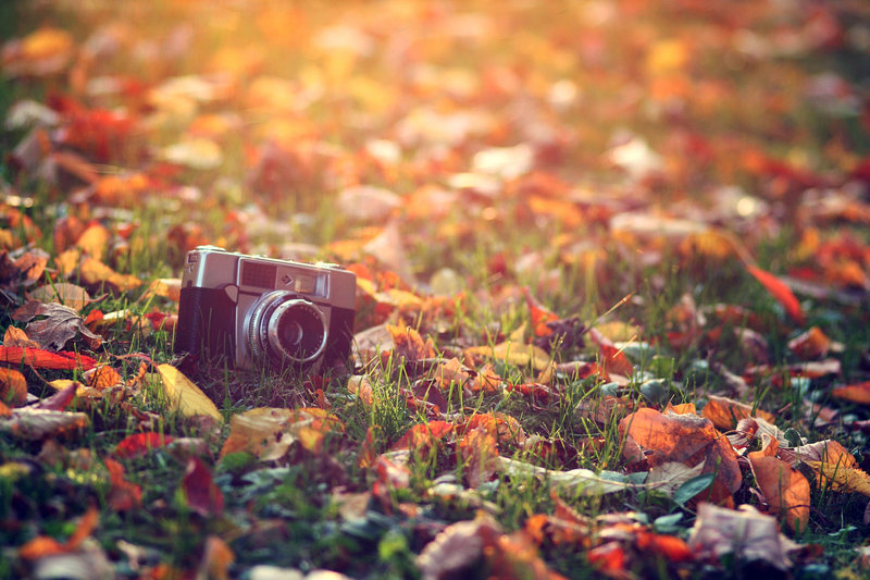 autumn, camera, colors, fall, leaf