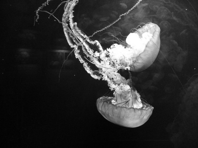 beautiful, black, black and white, jellyfish, light, love, ocean, photo, photography, pretty, water, white