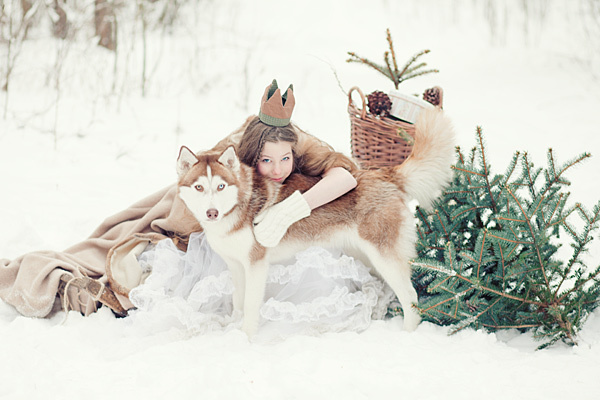 dog, husky, nature, snow, tree, winter