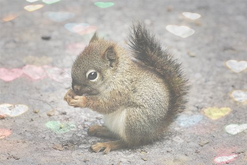 baby squirrel, cute, eating, food, hearts