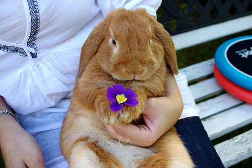 bunny, cute, flower, purple, rabbit