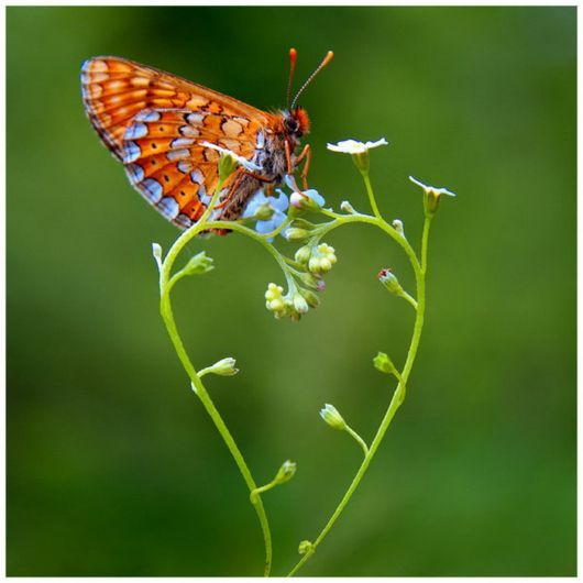butterfly, cute, flower, green, love, lovely, nature, romantic, sweet