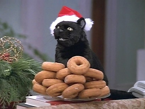 cat, cats, christmas, donut, donuts