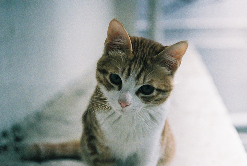 cat, photography, pretty, very cute