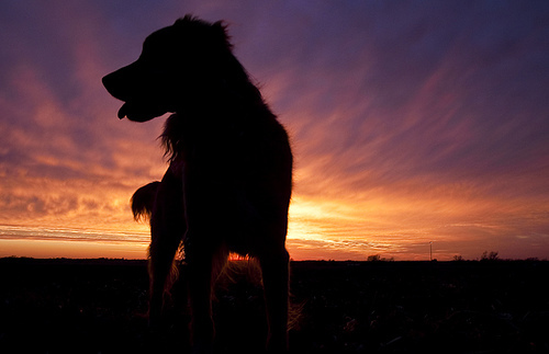 colours, djur, dog, sunset
