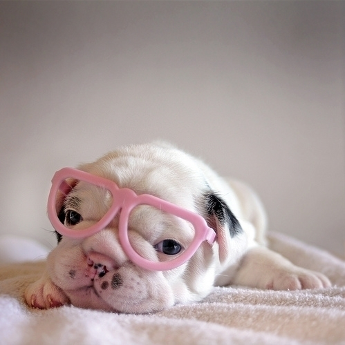 cute, dog, funny, glasses, sweet
