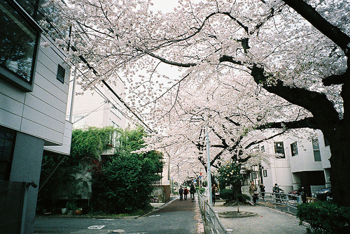 flowers, street, tree, trees