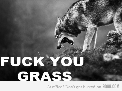 Funny Grass Wolf