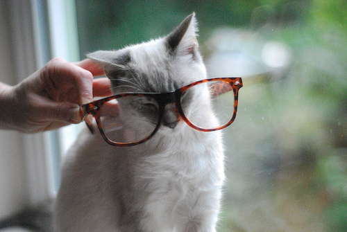 /tuesdayaffairs, adorable, cat, glasses, photography