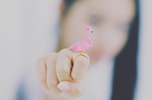anel, cute, fashion, flamingo, photography, pink, pretty, ring, ring animal