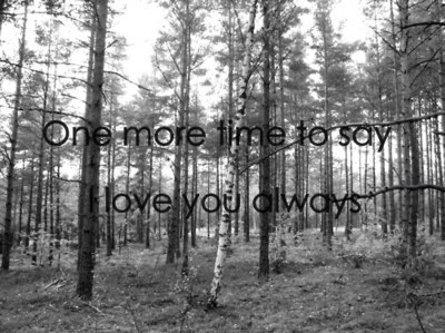 b&w, black and white, find a way, forest, love, lyrics, music, photo, photography, text, the used, trees, typography, used, words