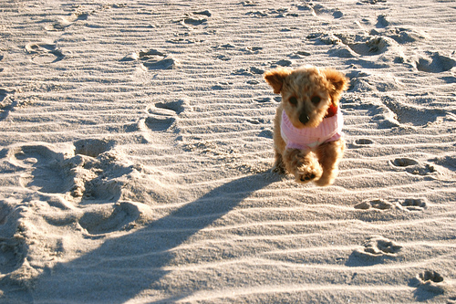 beach, beautiful, cute, cutie, dog, earth, pink, puppy