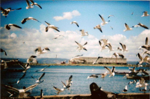amazing, beautiful, biirds, birds, blue, blue coast, clouds, free, freedom, heaven, lovely, ocean, sea, sky, vintage, water