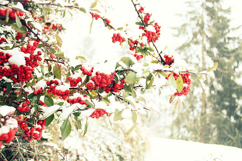 berries, christmas, love, red, snow