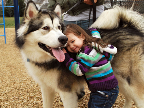 alaskan malamute, awwe, cute, dog, little girl