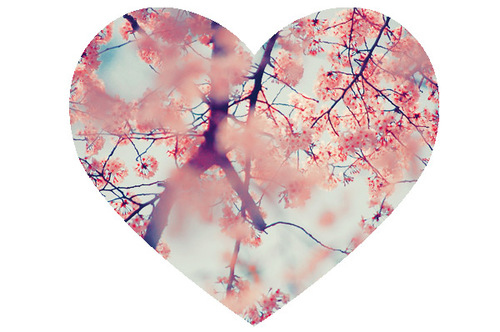 blue, cherry blossoms, flowers, heart, pink, tree