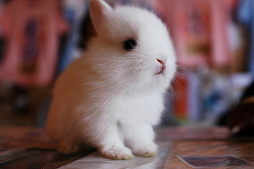 adorable, cute, rabbit, separate with comma, the one my first