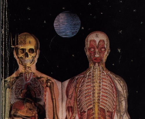 anatomical, anatomy, art, collage, macabre, skeleton, visual art