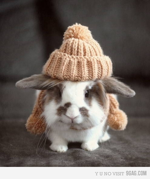 awww, bunny, bunny hat, cool, cute
