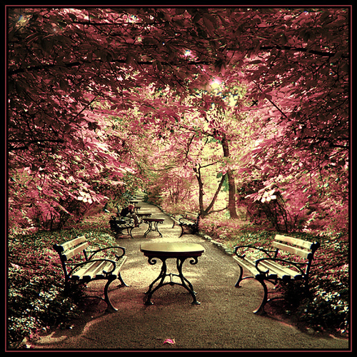 bench, flowers, garden, magenta, park, path, pink, poland, summer, trees