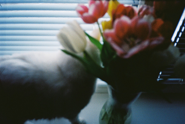 blue, cat, film, flowers, gray