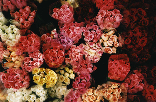 bouquet, floral, flower, flowers, madamelulu, pink, pretty, romantic, roses