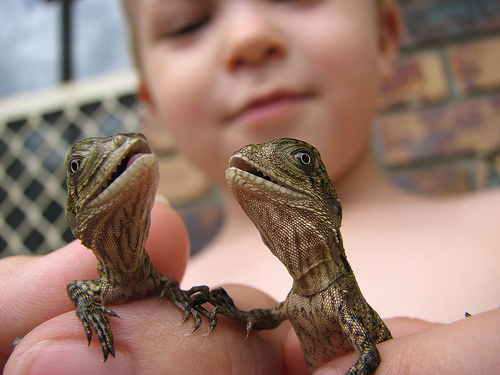 boy, cute, lizard