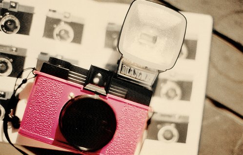 cute, holga, photography