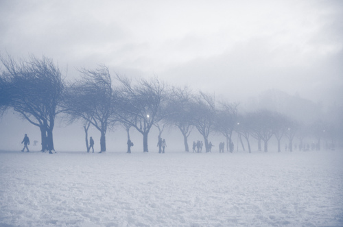 edinburgh, scotland, snow, the meadows, trees, winter