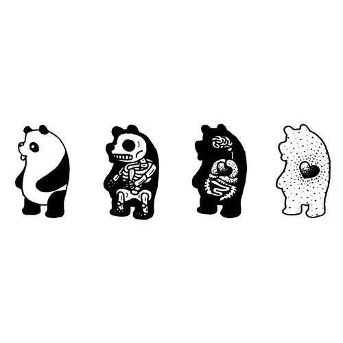 anatomy, bear, panda, vet, veterinary medicine