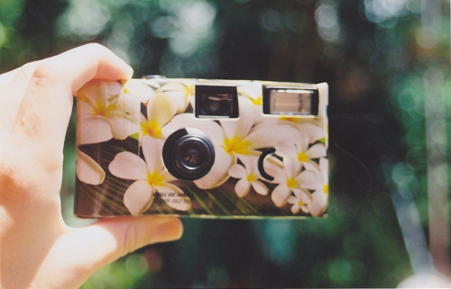 antigo, camera, flores, flower, flowers