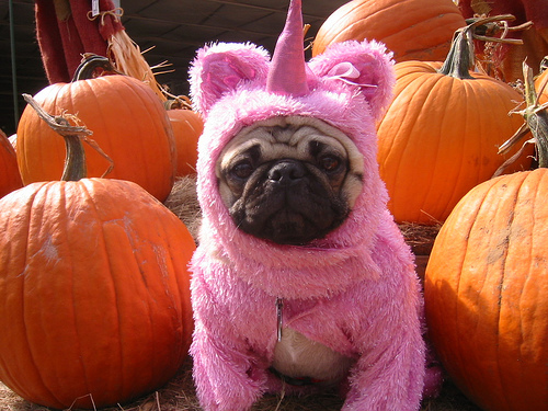 aww, awww, cute, funny, pug, unicorn