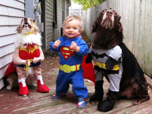 baby, batman, costumes, dogs, dress up, hilarious, superman, wonder woman