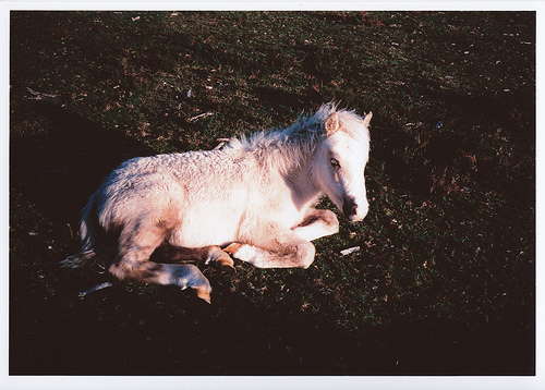 baby, cute, foal, horse, polaroid, pony, white