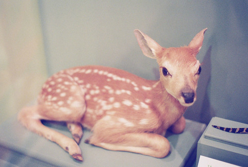 bambi, cute, deer, sweet