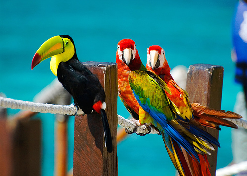 beach, bird, brazil, color, colour