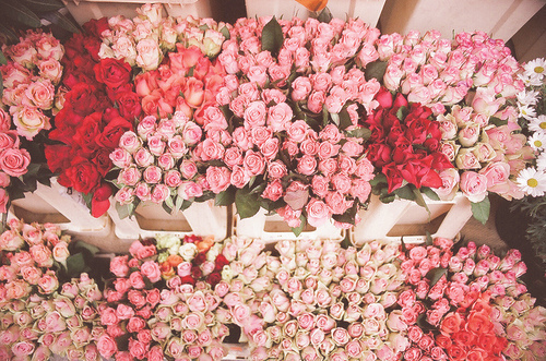 bouquet, flower, flowers, pink, rose