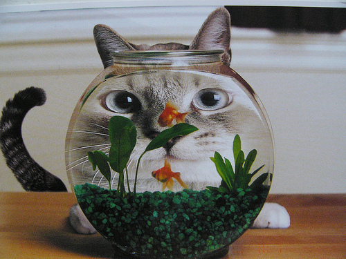Cat Cute Fish Image 212576 On