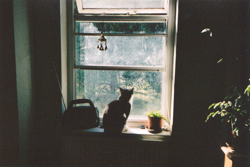 cat, cute, hipster, indie, vintage