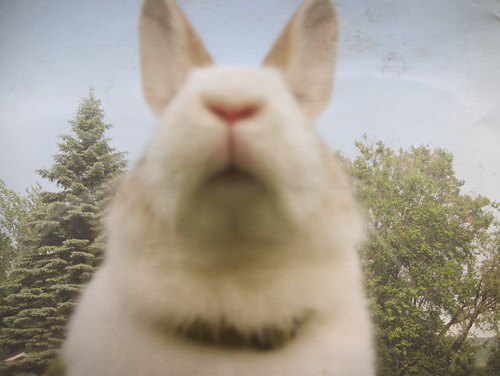 cute, hipster, indie, rabbit, vintage