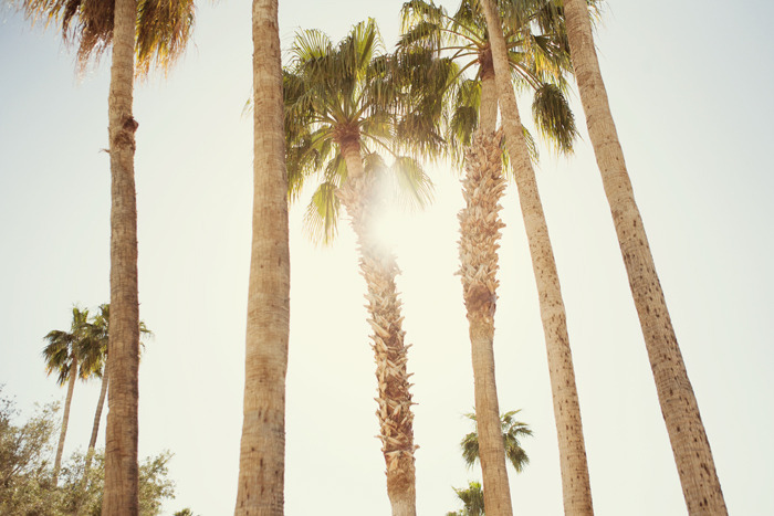light, palm, palm tree, summer, sun