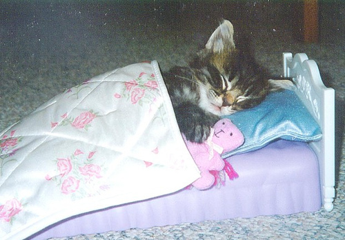 adorable, amazing, aww, bed, cat